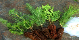 Tree Removal services Kingston, ON